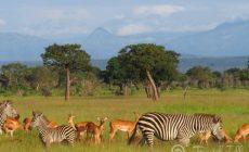 Танзанийское сафари для детей — мы идем с Занзибара
