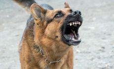 Собаки загрызли жительницу Брянска во дворе многоэтажки