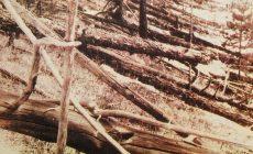 Новая трактовка загадки Тунгусского метеорита: не упал, а пролетел мимо