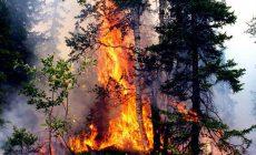 Вымрет ли вокруг нас всё живое: прогнозы экологов