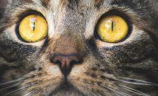 Живодер поиздевался на сбежавшим от хозяйки котом