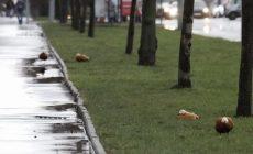 Ученые предрекли городам «полное одичание» через полгода самоизоляции